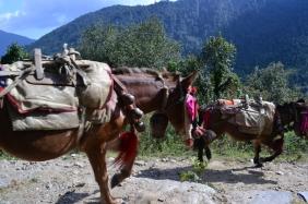 Nepal, trek to the ABC #2